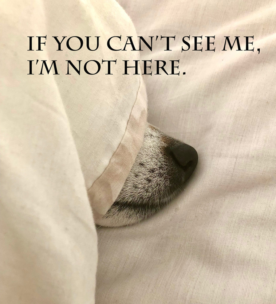 Dog hiding in bed