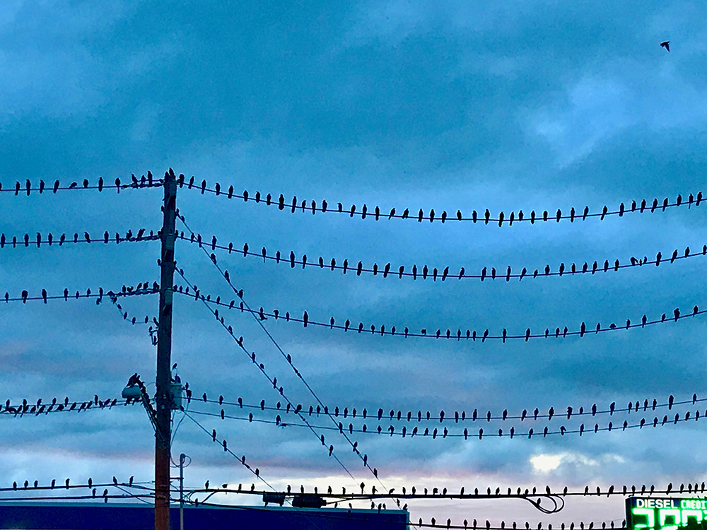 birds all lined up on electrical wires