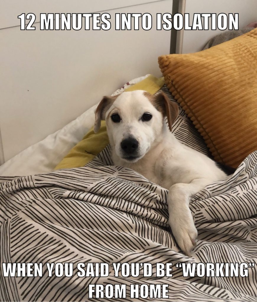 Jack Russell meme about sleeping instead of working