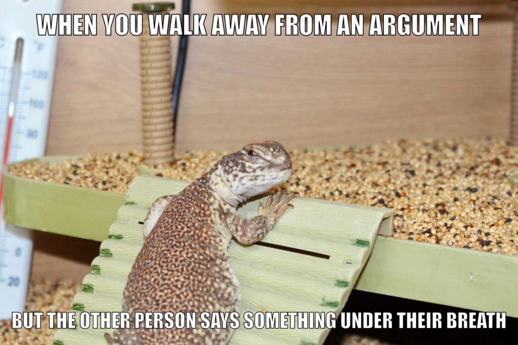 uromastyx lizard meme about arguments