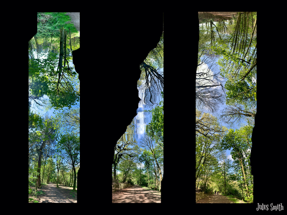 A panorama x 3 photos of the woods