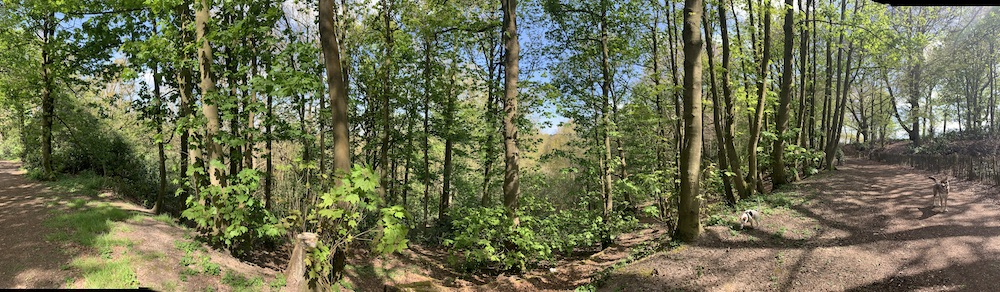 panorama photo of English woods