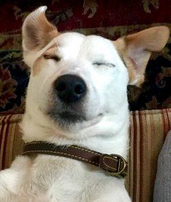 JR Parsons terrier