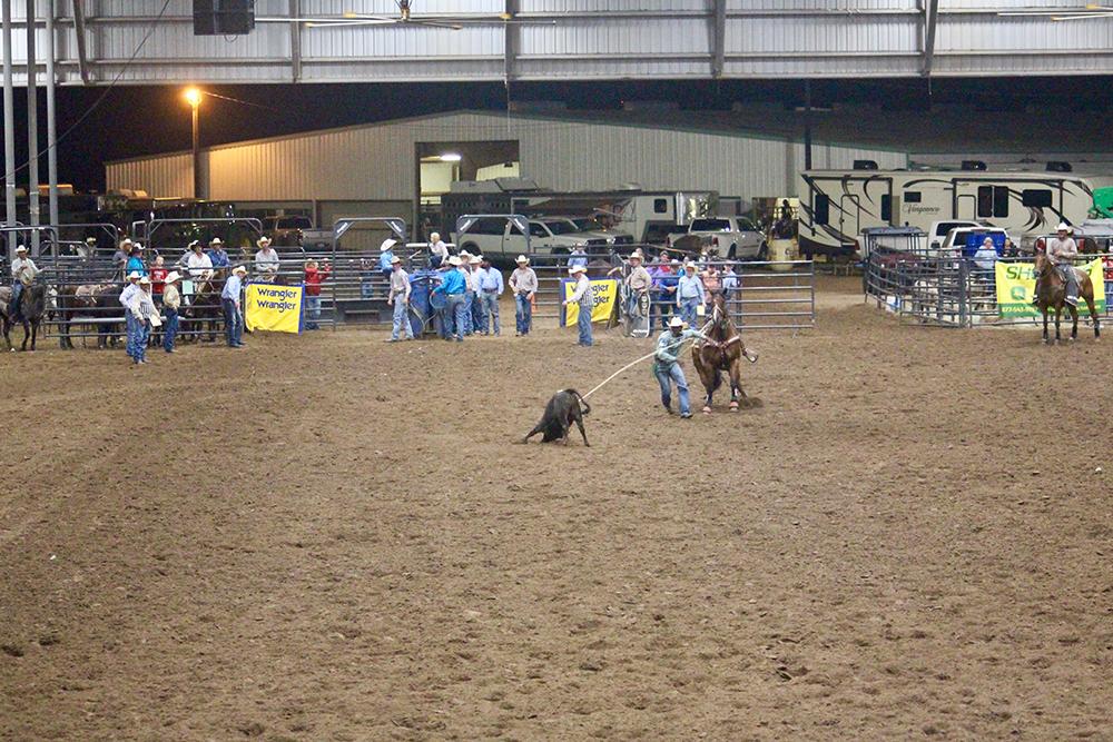 roping a calf
