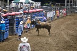 Bull rider in Texas