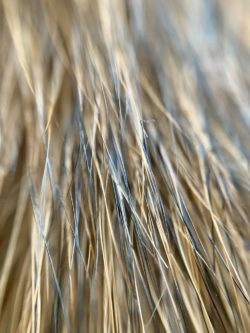 close up of dog hair