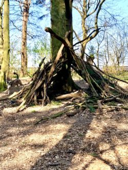 den made out of branches in the woods