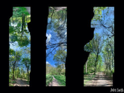 A panorama - vertical panorama of woods